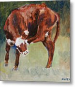 Head-scratching Heifer Pad Metal Print