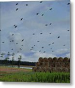 Headed For The Pond Metal Print
