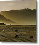 Heading Home In The Evening Metal Print
