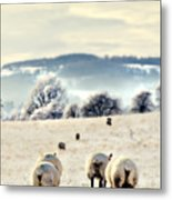 Heading Home Metal Print by Meirion Matthias