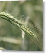 Healthy Whole Wheat Metal Print