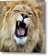 Hear Me Roar Metal Print