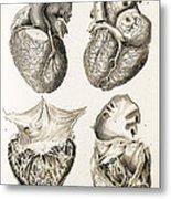 Heart, Anatomical Illustration, 1814 Metal Print
