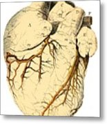 Heart Anatomy, 18th Century Metal Print by