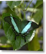Heart Leaf Butterfly Metal Print
