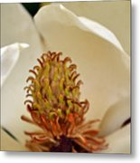 Heart Of Magnolia Metal Print