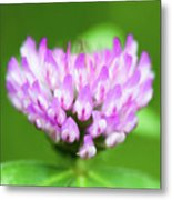 Heart Shaped Clover Metal Print