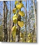 Heart Shaped Leaves Wrapped Around A Tree Metal Print