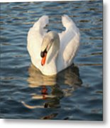 Heart Shaped Pride And Grace Metal Print
