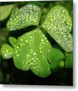 Heart Shaped With Water Drops Metal Print