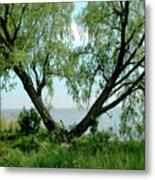 Heart Tree On Lake Saint Clair Metal Print