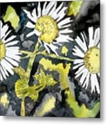 Heath Aster Flower Art Print Metal Print