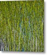 Heather Lake Grass Metal Print