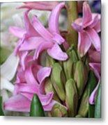 Heavenly Hyacinths Metal Print