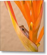 Heliconia And Frog Metal Print