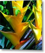 Heliconia Caribea Gold Metal Print
