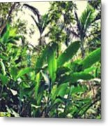 Heliconia Cluster Metal Print