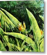 Heliconia Flowers 6 Metal Print