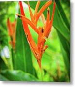 Heliconia Psittacorum Metal Print
