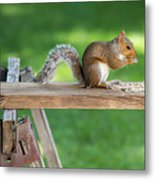 Hello Are You Gonna Eat All That? Chipmunk And Squirrel Metal Print