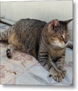 Hemingway Polydactyl Cat Metal Print