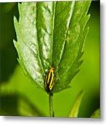 Hemiptroid Sucking Bug Metal Print