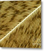 Hens Feather Metal Print