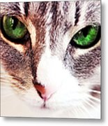 Her Emerald Eyes. Kitty Time Metal Print