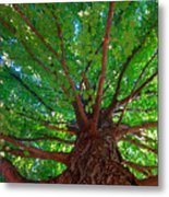 Her Leafy Arms Metal Print
