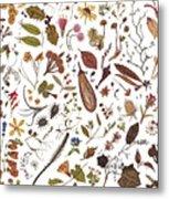 Herbarium Specimen Metal Print