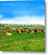 Herd Of Cows Under A Blue Sky In Green Hills Metal Print