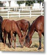 Herd Of Horses Ranch Scene Metal Print