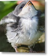 Here Comes Mommy Metal Print by Randy Bodkins
