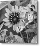 Here I Am In Black And White Metal Print