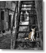 Here Kitty Kitty Kitty... Metal Print