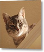 Here's Lookin At You Metal Print