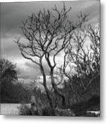 Hermit Island Tree 0912 Metal Print