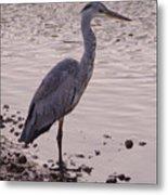 Heron And Grey Water Metal Print