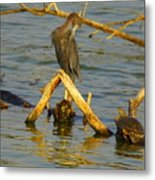 Heron And Turtle Metal Print
