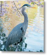 Heron - Beacon Hill Park Metal Print
