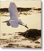 Heron Fly-by Metal Print