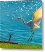 Heron Great White   Pastel   Metal Print