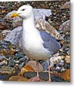 Heron Gull Metal Print