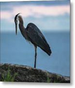 Heron In Colchester Metal Print