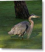 Heron In Dark Pond Metal Print