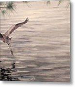 Heron In Flight Metal Print