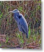 Heron In Marshes Metal Print