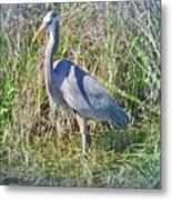 Heron In The Wetlands Metal Print