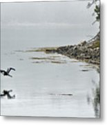 Heron Off Ship's Harbor Cove Metal Print