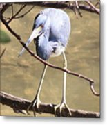 Heron On Branch Metal Print